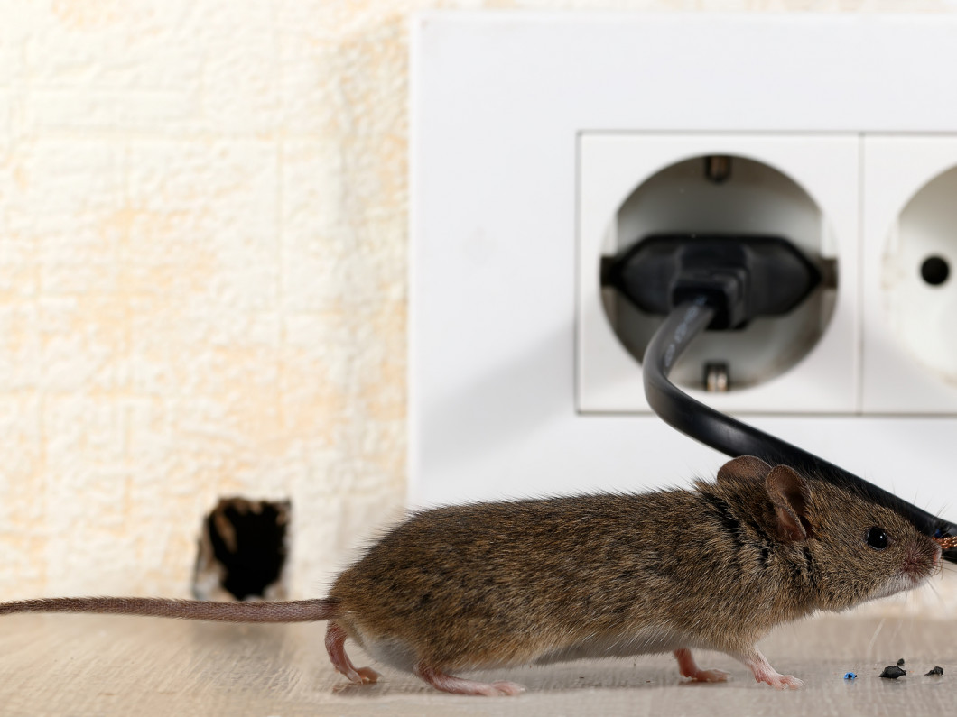 We offer residential and commercial rodent extermination services in Citrus Heights, Orangevale, Roseville, CA and surrounding areas