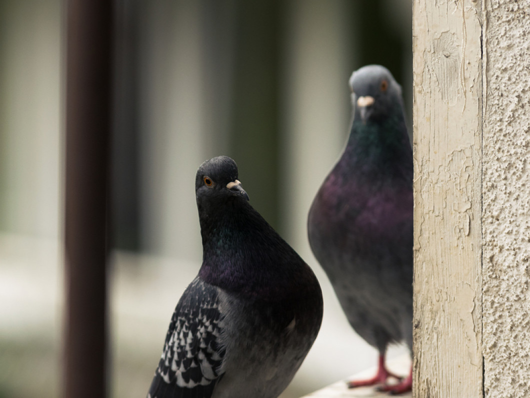 Does Your Home or Business have a Bird Problem?