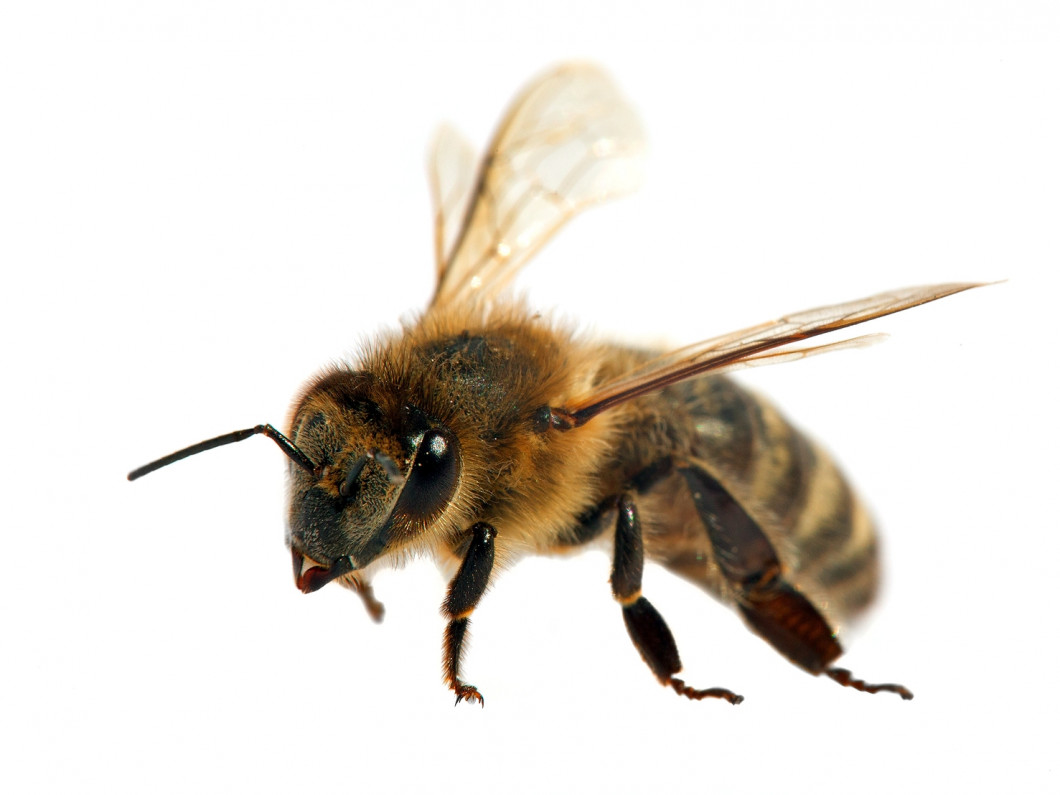 Carpenter Bee Removal In Citrus Heights & Orangevale, CA